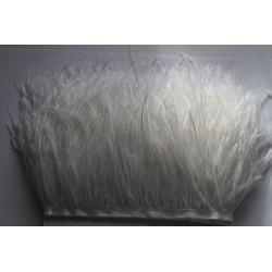 Pióra strusie frędzle białe